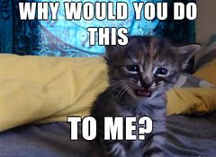 Image result for wasn't so comfortable cat meme