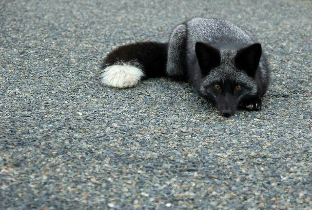 fox%203
