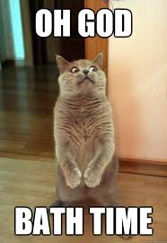 Oh God bath time - Horrorcat - quickmeme