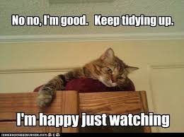 Lolcats - tidy - LOL at Funny Cat Memes - Funny cat pictures with ...