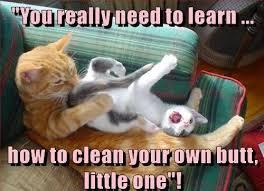 Hilarious Memes 2018 Clean   Funny cat memes, Cat quotes funny ...