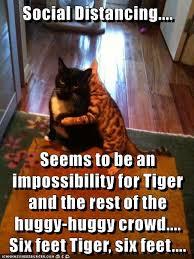 Social Distancing.... - Lolcats - lol   cat memes   funny cats ...