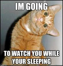 watch you in your sleep - Imgflip