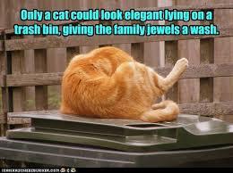 Lolcats - family jewels - LOL at Funny Cat Memes - Funny cat ...